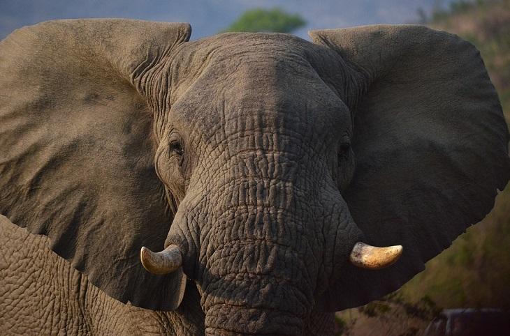 בדיחה על משפחה בקרקס: פיל