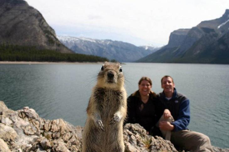 18 תמונות משעשעות: סנאי מגיח מול מצלמה של זוג שהיה מעוניין לצלם סלפי