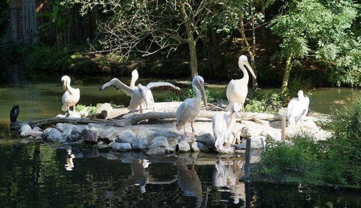13 אתרים בעיר ליל צרפת: פארק הזואולוגי של ליל