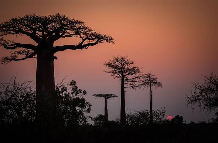 מדגסקר: שקיעה