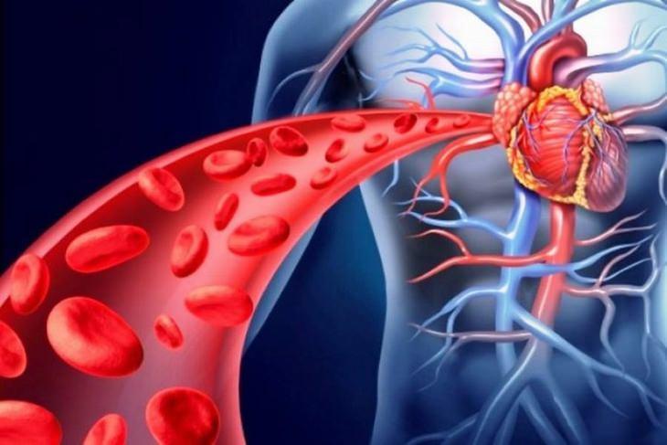 בעיות בזרימת הדם: איור של מחזור הדם