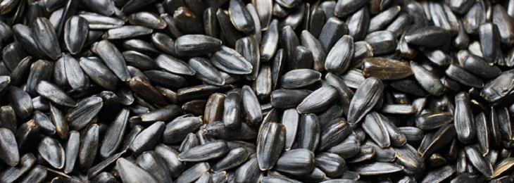 חסכים תזונתיים הגורמים לדכאון: גרעיני חמנייה