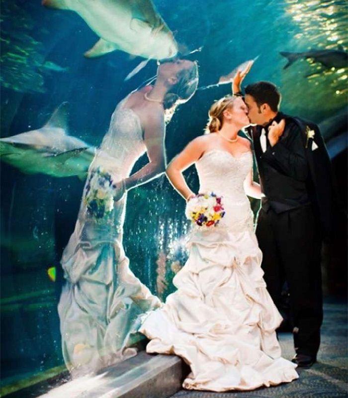 תמונות ברגע הנכון: חתן וכלה שצולמו על רקע אקווריום כשכריש עבר ברקע