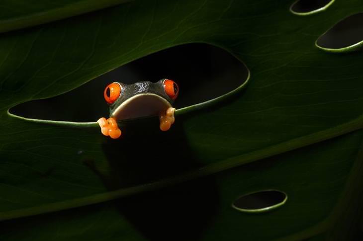תמונות שחושפות פלאיו של העולם: צפרדע מציצה דרך חור בעלה