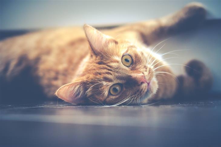 טריקים לבעלי חתולים: חתול