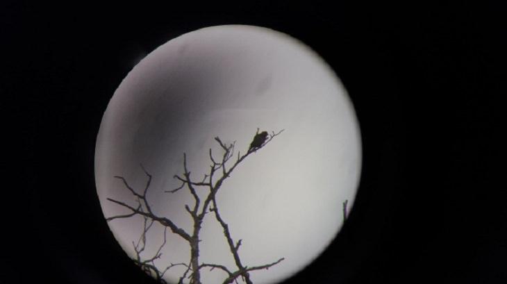תמונות מתעתעות: ציפור מבעד לעדשת טלסקופ
