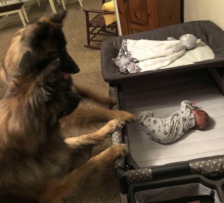 ילדים וכלבים: שני כלבים מסתכלים על תינוק בעריסה