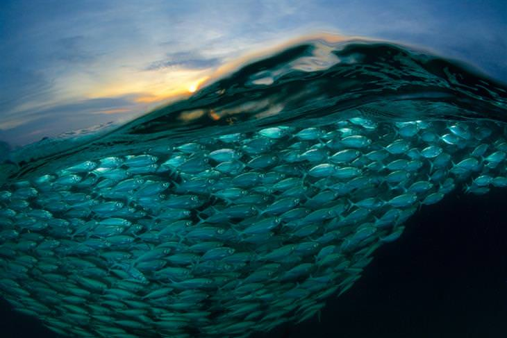 תחרות צילום של סוני: נחיל של דגים בים