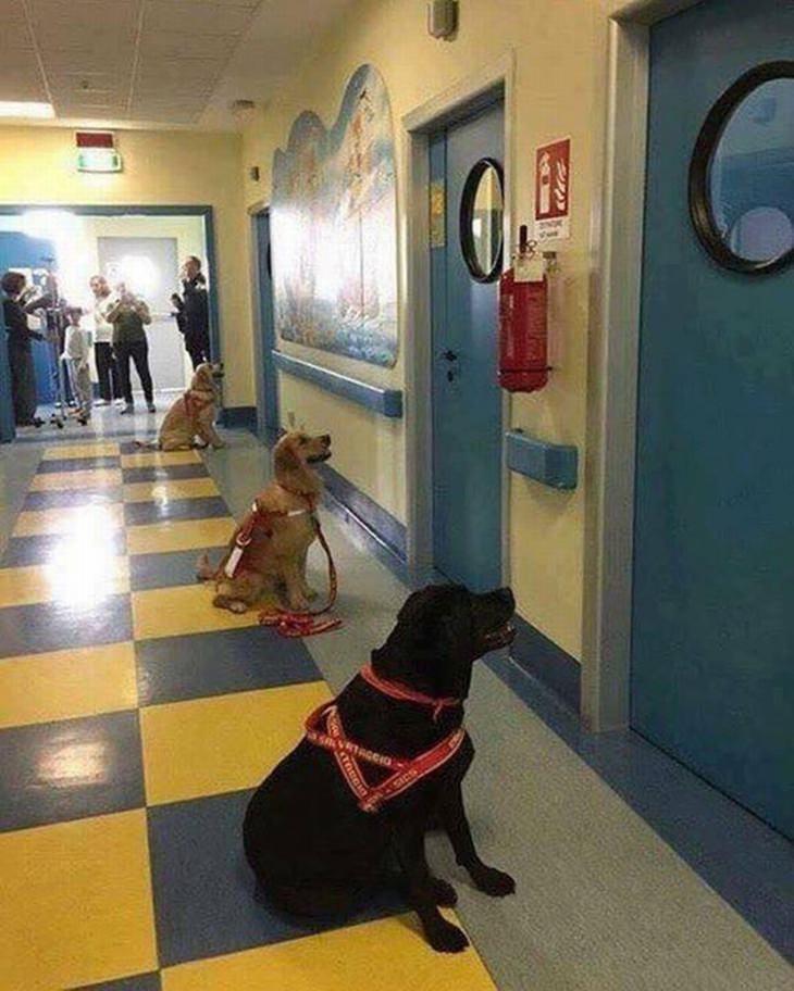 חיות חמודות שיפתיעו אתכם: כלבים טיפוליים מחכים להיכנס לחדרי הטיפול