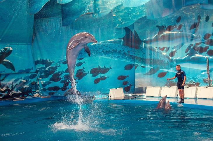 אטרקציות בברצלונה לכל המשפחה: מופע דולפינים בגן החיות של ברצלונה