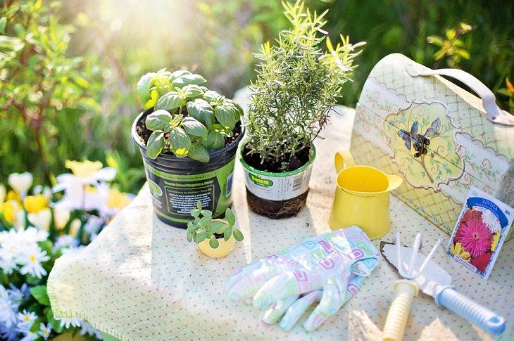 הצמחים שמומלץ לשתול ולגדל באביב: צמחים וכלי עבודה על שולחן גינון לאור השמש