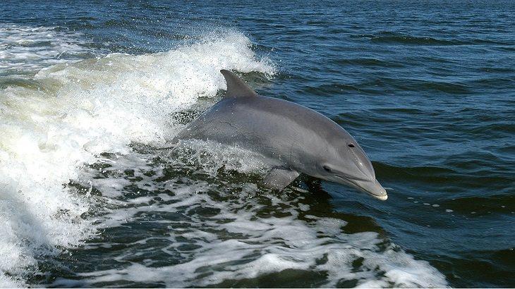 כוחות על של יצורים ימיים: דולפין