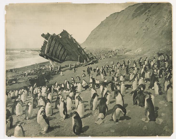 """המסע ההיסטורי של משלחת אוסטרלאסיה לאנטארקטיקה: ספינה טרופה שעונה לשם """"הוכרת תודה"""" ונשארה בחופי אנטארקטיקה"""