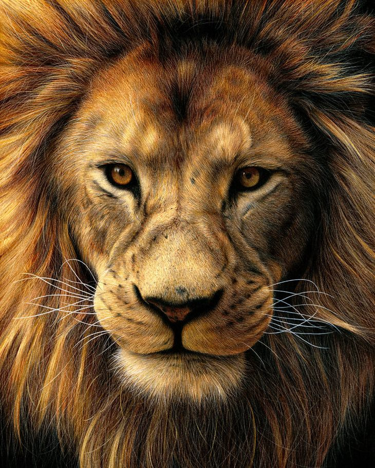ציורים פוטוריאליסטים של הת'ר רוני: אריה