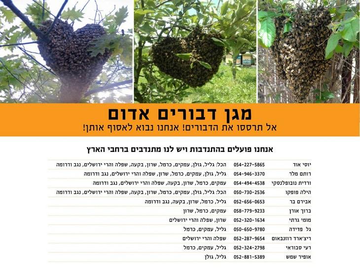"""מגן דבורים אדום: מספרי טלפון של מתנדבי """"מגן דבורים אדום"""""""