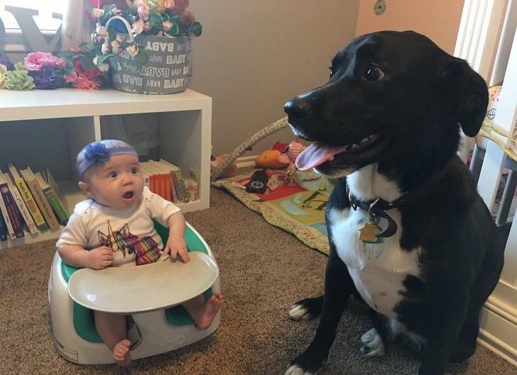 חוויות ראשונות: ילדה קטנה וכלב