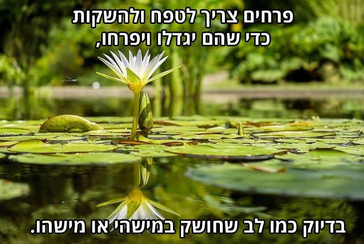 ברכה לאנשים אהובים: פרחים צריך לטפח ולהשקות כדי שהם יגדלו ויפרחו, בדיוק כמו הלב שחושק במישהי או מישהו.