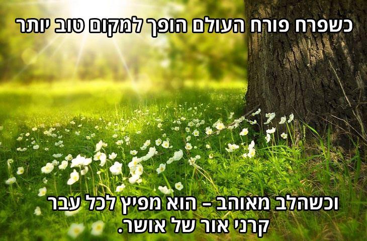 ברכה לאנשים אהובים: כשפרח פורח העולם הופך למקום טוב יותר, וכשהלב מאוהב – הוא מפיץ לכל עבר קרני אור של אושר.