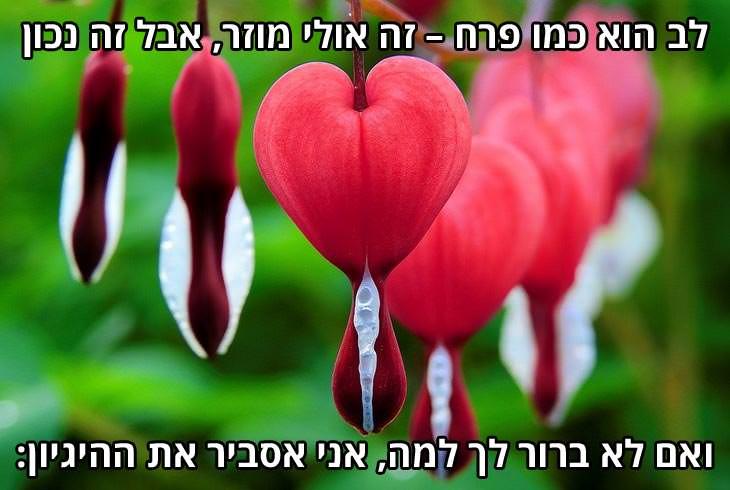 ברכה לאנשים אהובים: לב הוא כמו פרח – זה אולי מוזר, אבל זה גם נכון ואם לא ברור לך למה, אני אסביר את ההיגיון:
