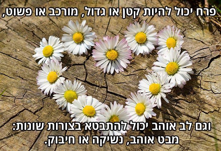 ברכה לאנשים אהובים: פרח יכול להיות קטן או גדול, מורכב או פשוט, וגם לב אוהב יכול להתבטא בצורות שונות – מבט אוהב, נשיקה או חיבוק.