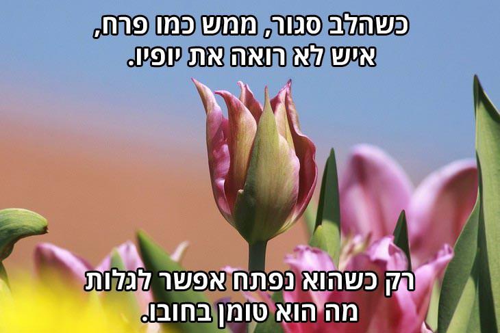 ברכה לאנשים אהובים: כשהלב סגור, ממש כמו פרח, איש לא רואה את יופיו, ורק כשהוא נפתח אפשר לגלות מה הוא טומן בחובו.