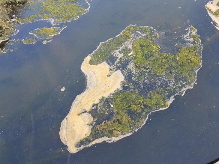 תמונות שנראות כמו אשליות אופטיות: טחב שנראה כמו צילום של אי מלמעלה