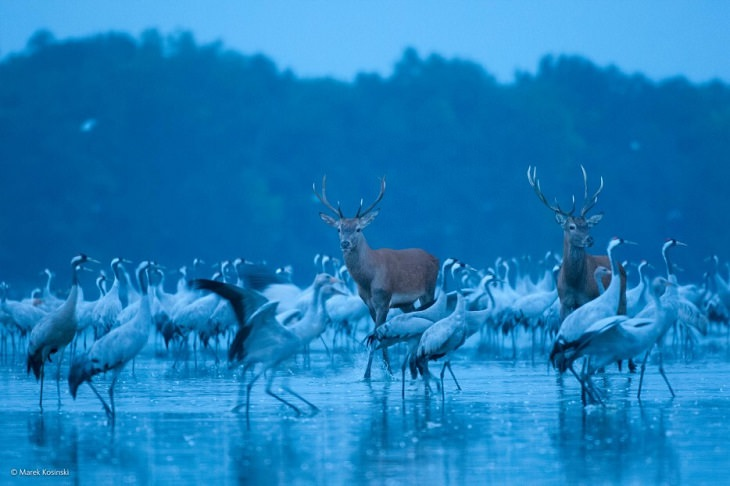 חיות חמודות: איילים וציפורים על אגם
