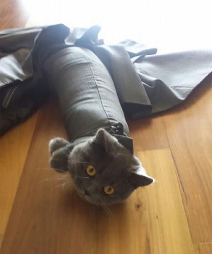 חתולים מבולבלים: חתול תקוע בתוך שרוול של חליפה