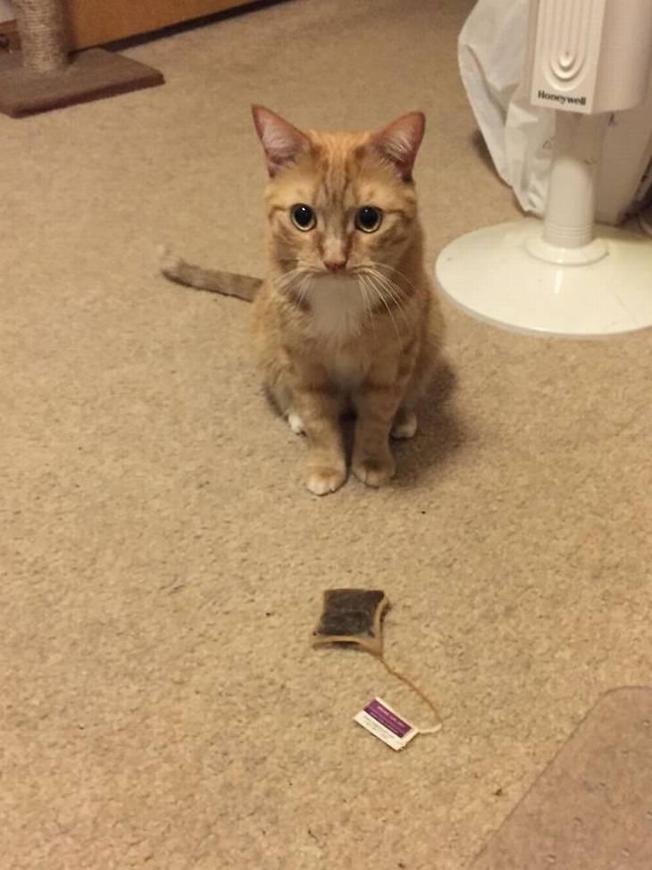 חתולים מבולבלים: חתול עומד מול תיון