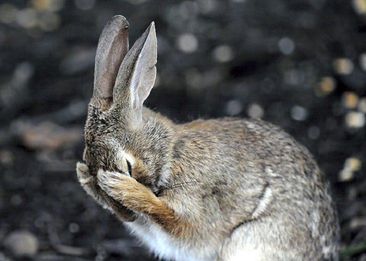 חיות מצחיקות: ארנב מכסה את האוזניים