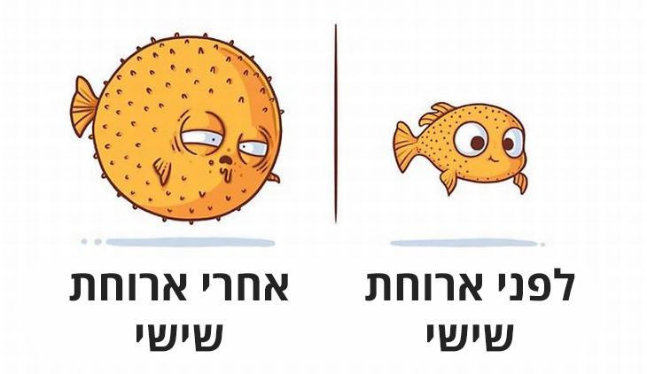 לפני ואחרי: דג קטן לפני ארוחת שישי וגדול ונפוח אחרי ארוחת שישי