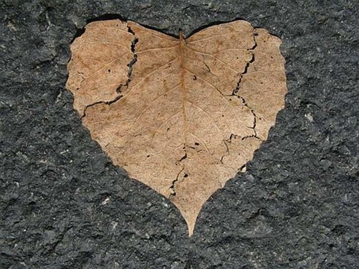 לבנות אמון מחדש: עלה מיובש בצורת לב עם סדקים
