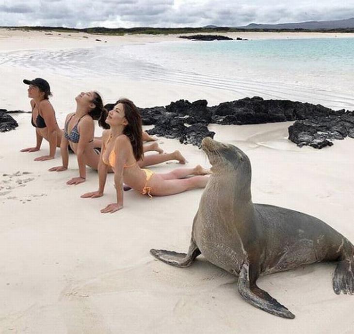 בעלי חיים חמודים במיוחד: כלב ים עושה יוגה עם עוד 3 נשים על חוף הים