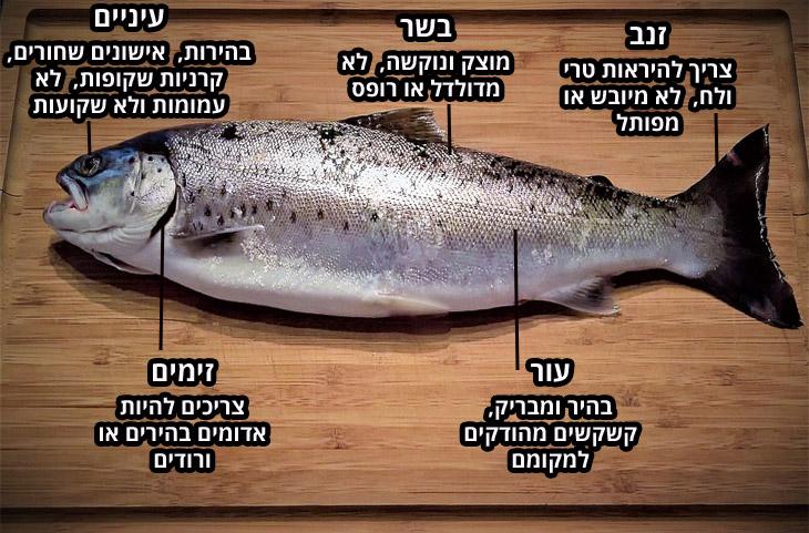 מדריך הדגים המלא: דג על משטח עץ עם הסברים על בחירת דג טרי