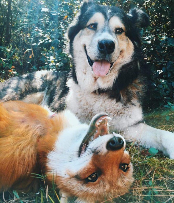 חיות מחייכות: שועל וכלב בתצלום מחוייך