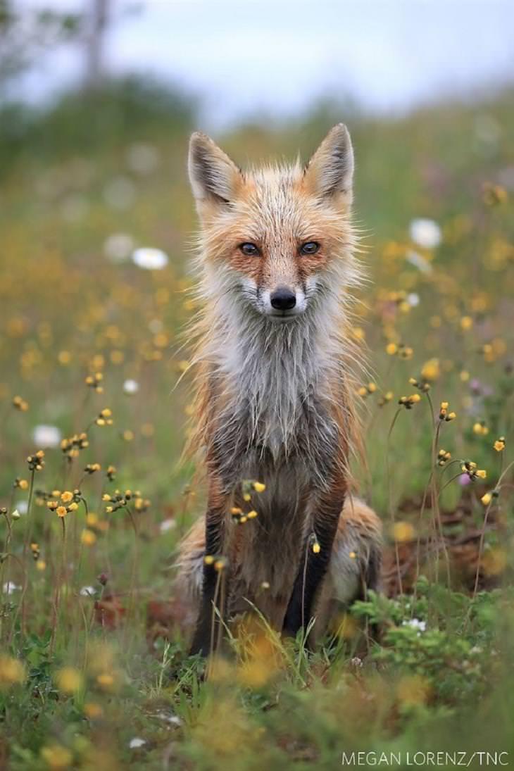 """זוכי תחרות התמונות של החברה לשימור הטבע: """"צופה בך צופה בי"""""""