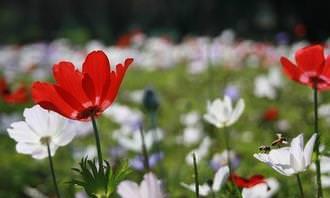 בחן את עצמך: שדה פרחים