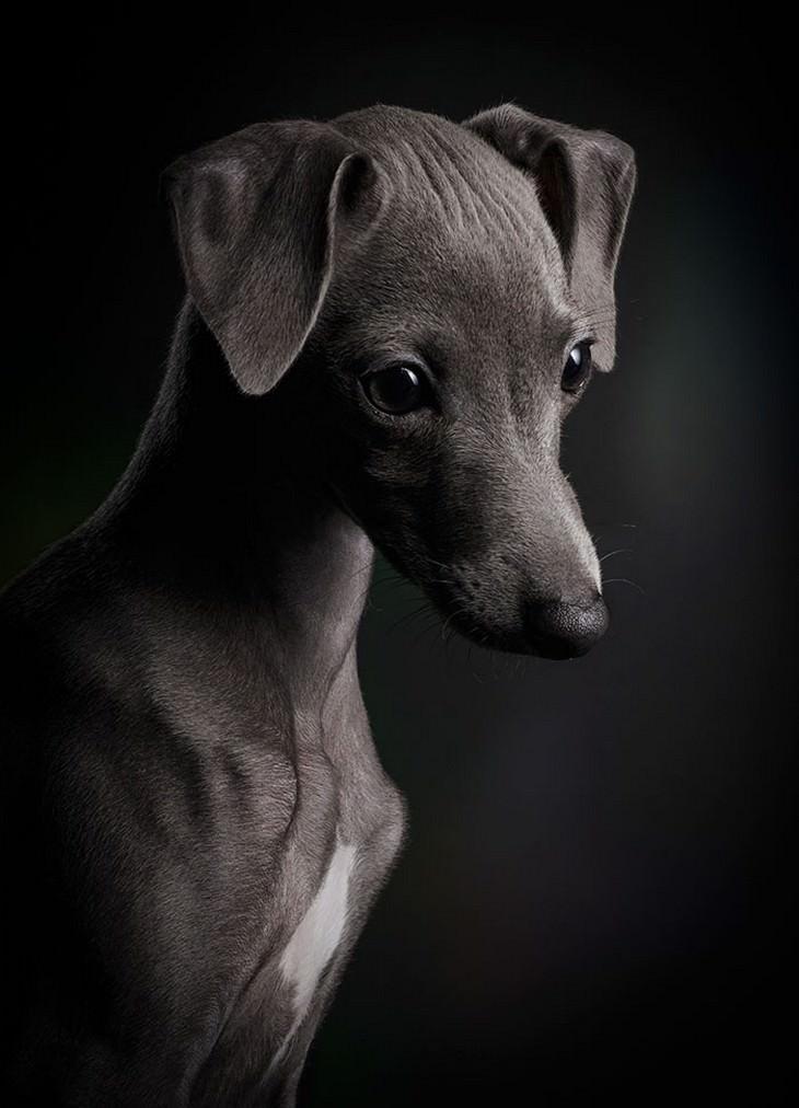 כלבים חמודים: פורטרט של כלב