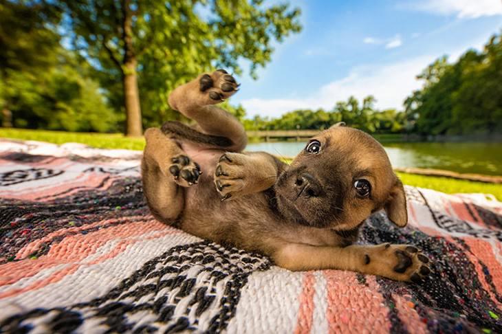 כלבים חמודים: גור כלבים שוכב על הגב