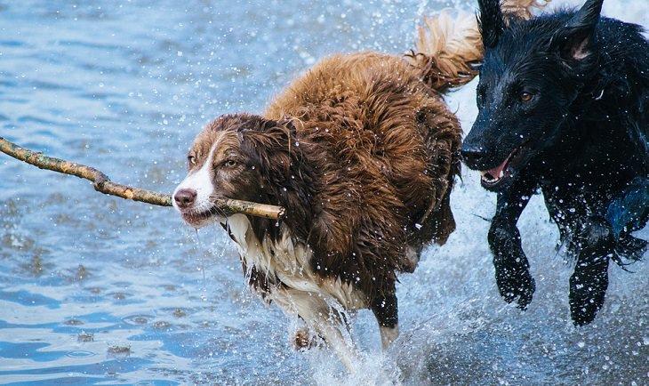הסיפור העצוב של כריס וכלבו: שני כלבים רצים על מים בקו החוף