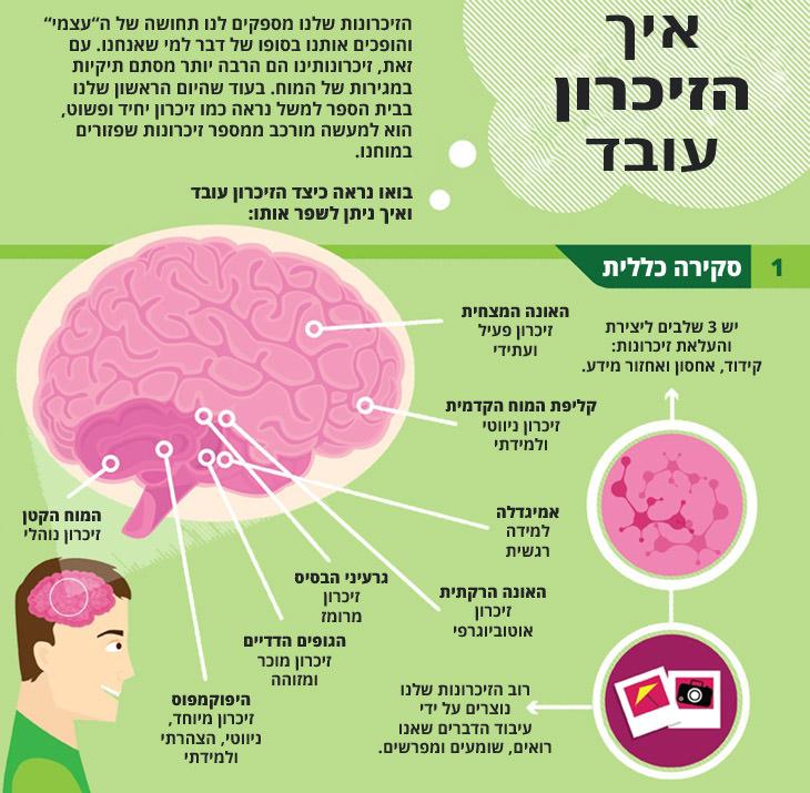 איך הזיכרון עובד ו-9 דרכים שונות שיעזרו לכם לשפר אותו