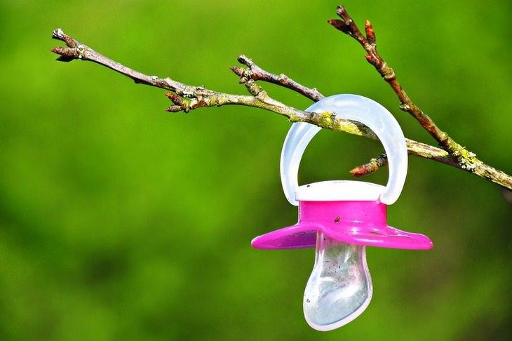 האם לתת מוצץ לילדים: מוצץ סיליקון ורוד תלוי על ענף של עץ