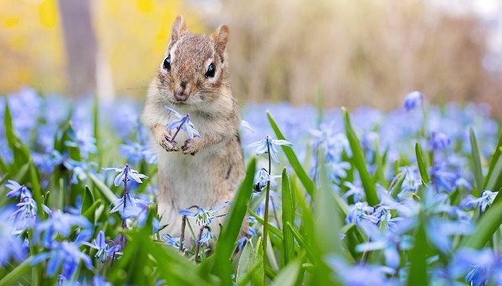 חיות חמודות ומצחיקות: סנאי אוחז פרח כחול בידו