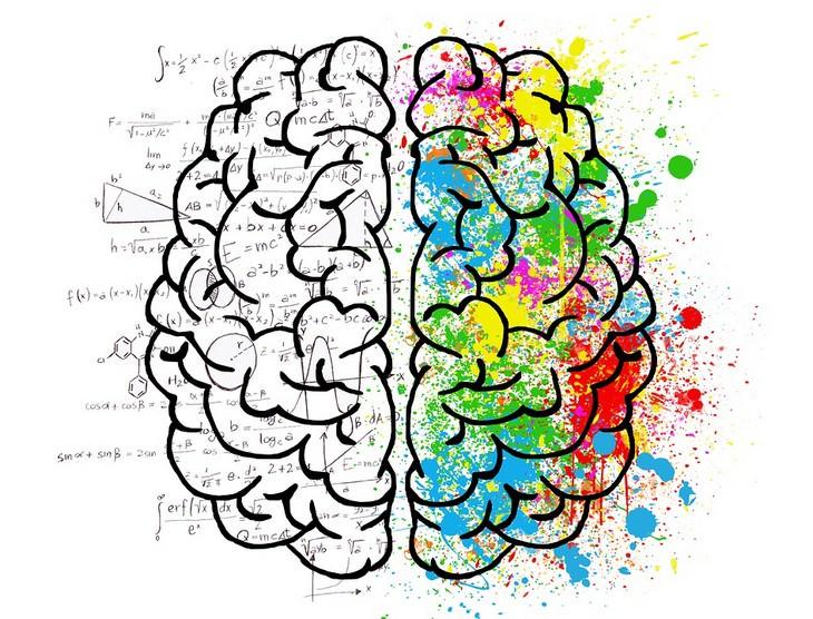 טקטיקות לשיפור התקשורת: המוח האנושי צבוע לפי הצדדים שלו - רגיש ולוגי