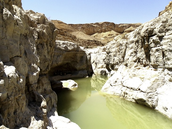 מסלולי טיולים באזור ים המלח: גב מים גדול בנחל צפית