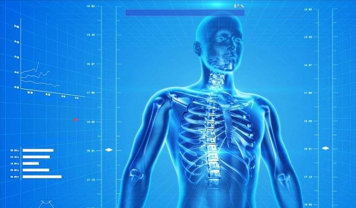 בעיות אורתופדיות נפוצות: איור של שלד פלג הגוף העליון