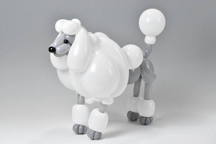 חיות מבלונים: כלב פודל