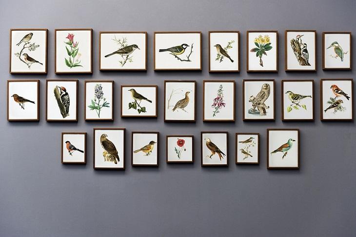 שימושים נוספים לחוט דנטלי: מספר תמונות של ציפורים אשר תלויות על קיר