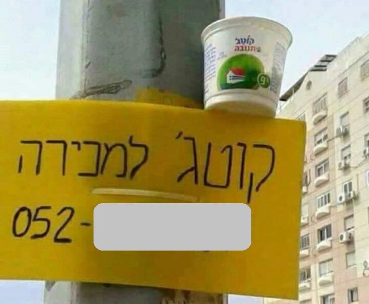 שלטים מצחיקים: שלט קוטג' למכירה עם גביע קוטג' מעליו