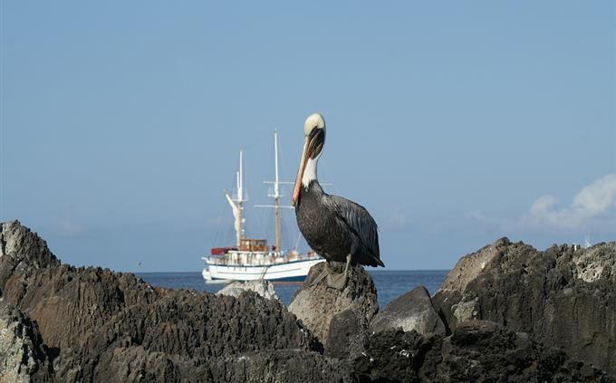 מבחן טריוויה: ציפור על אי